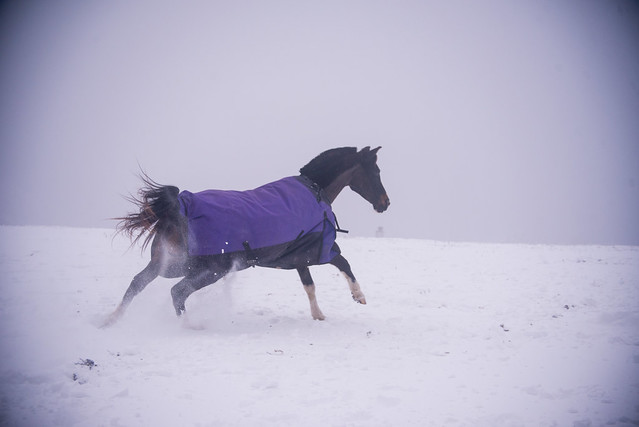 202001095 Horses and Dogs in Snow_117