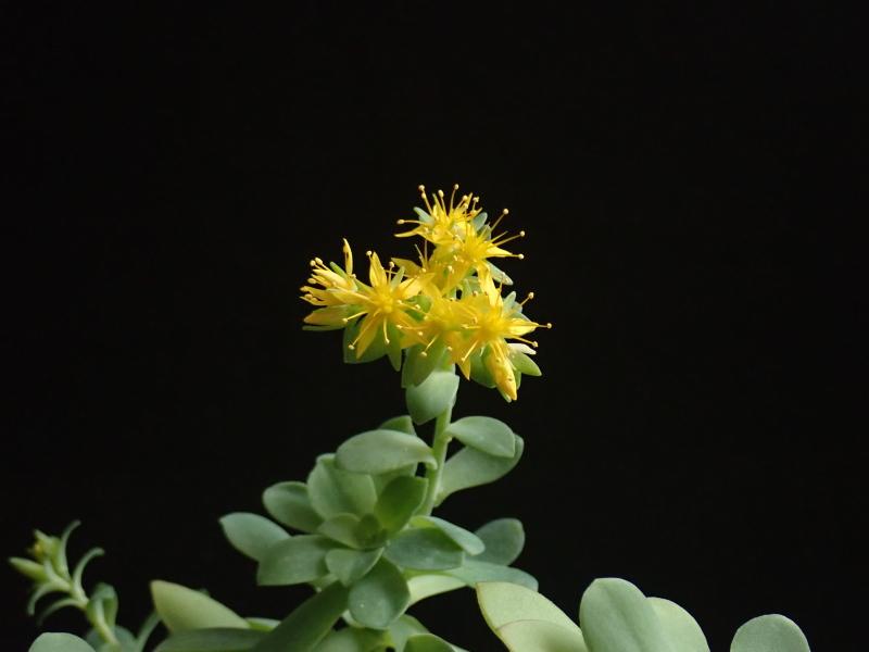 Les succulentes chez Cloo en 2020 49380127841_57b06434bc_o