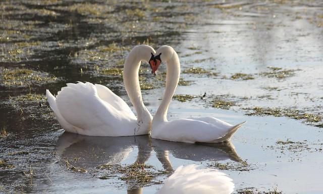 Verliebt - in love