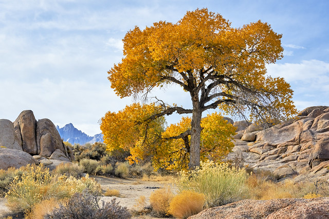 What a Beauty - Lonely Tree in Alabama Hills, California