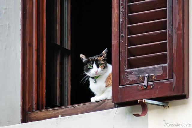 Una gatta alla finestra - A cat at the window