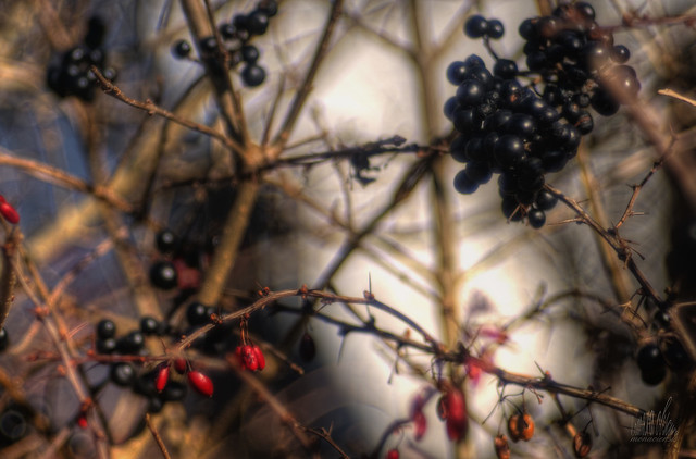 Fruit in the wintertime
