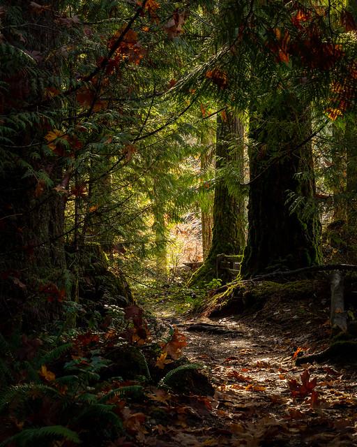 Cowichan River Trails