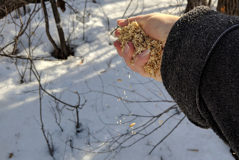 A hand sprinkling seeds above snow.