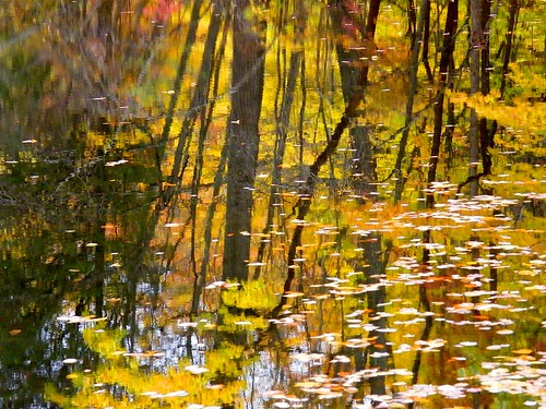 Golden Fall Reflection