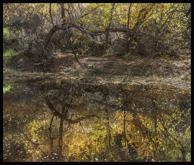 Sabino Canyon #4 2020; Reflections