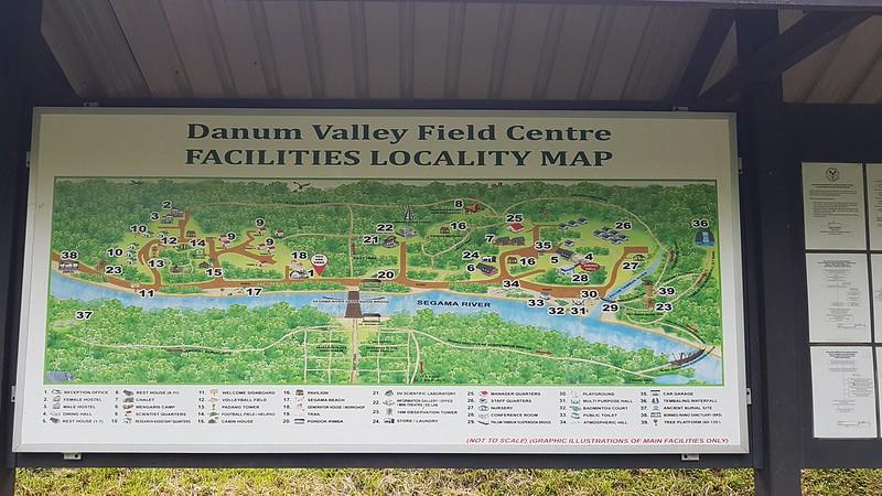Danum Valley 10 Jan 2020