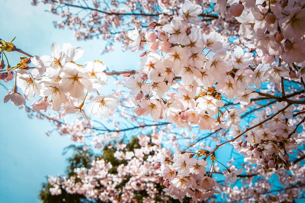 Spring Korea Packing List