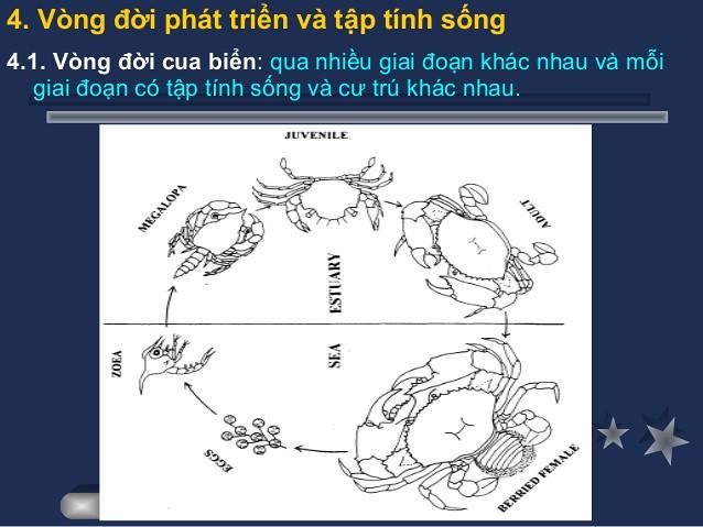 bai-giang-cua12ky-su-ut-6-638