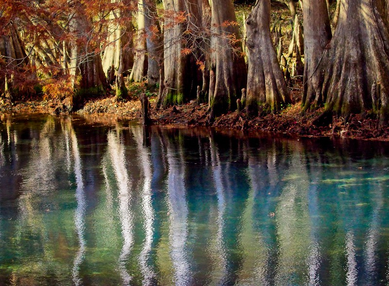 The blue waters of Manatee Springs