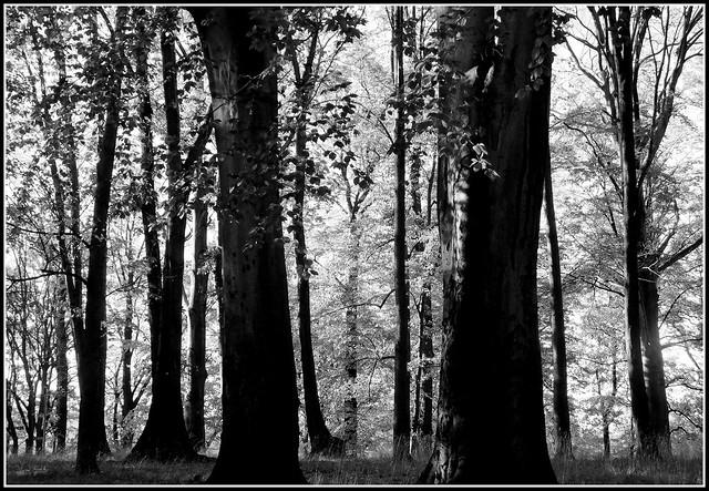 Drzewa.