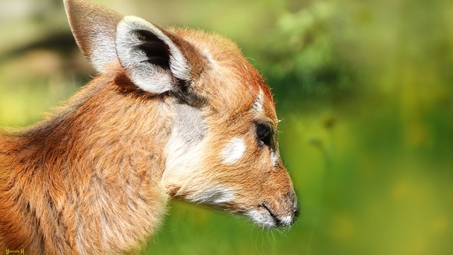 Animal - 7971