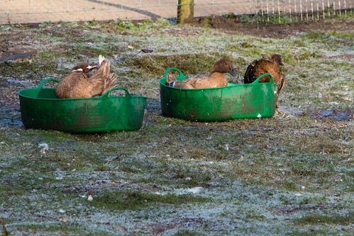 Quick bath on frosty morning