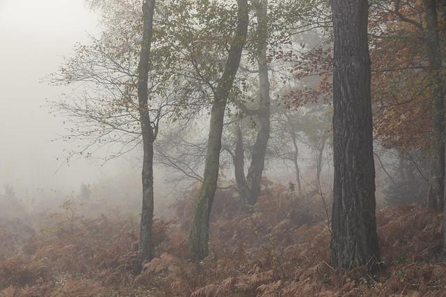 Autumnal fog