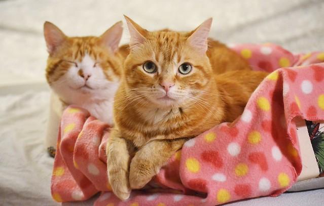 Gino & Spritz ♥♥ -  Excellent_Cats