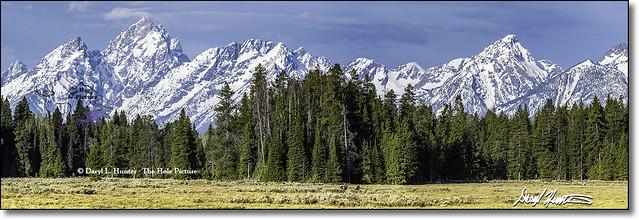 Grizzly Bear Teton Panorama