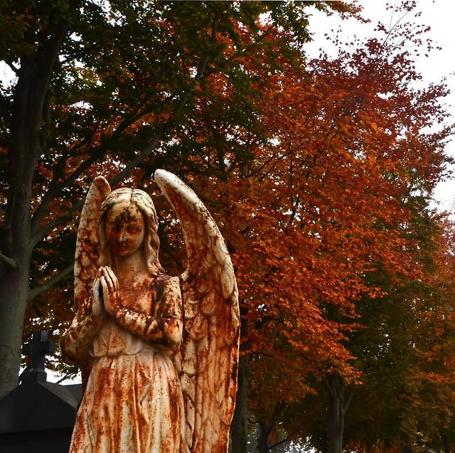 """""""L'ange est le musicien du silence de Dieu."""" (Dominique Ponnaud) """"The angel is the musician of God's silence."""""""