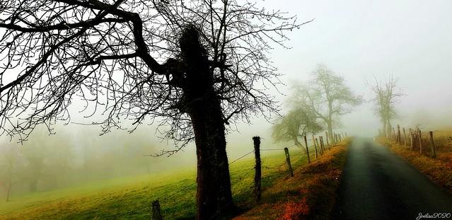 ~~ Les arbres dans la brume...~~