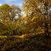 Ashenbank Wood