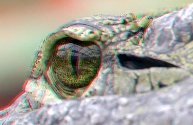 Crocodile-eye Blijdorp Zoo 3D