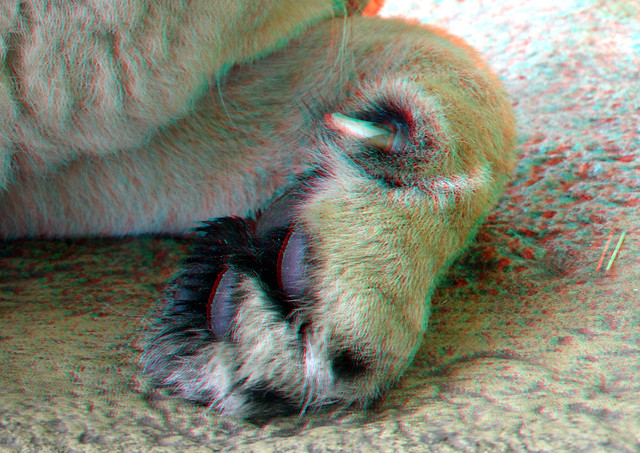 Claw Lion Blijdorp Zoo 3D