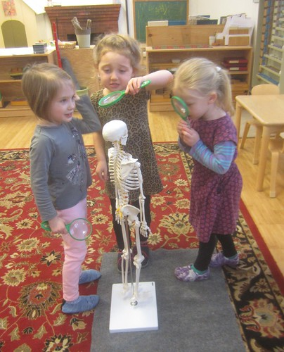 studying the skeleton