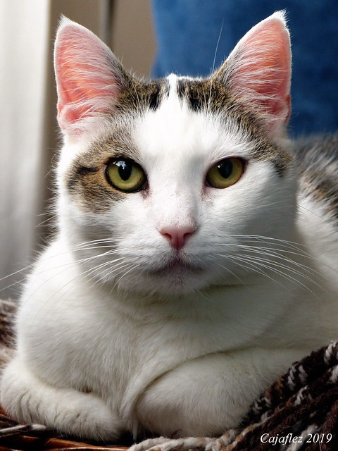 Pretty Jasmijn