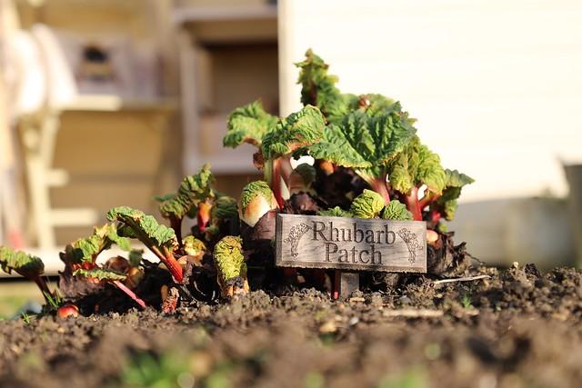 Hello Rhubarb
