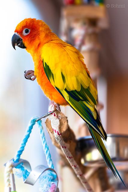 Parrot-01