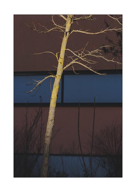 enlightened tree in front of a dark building