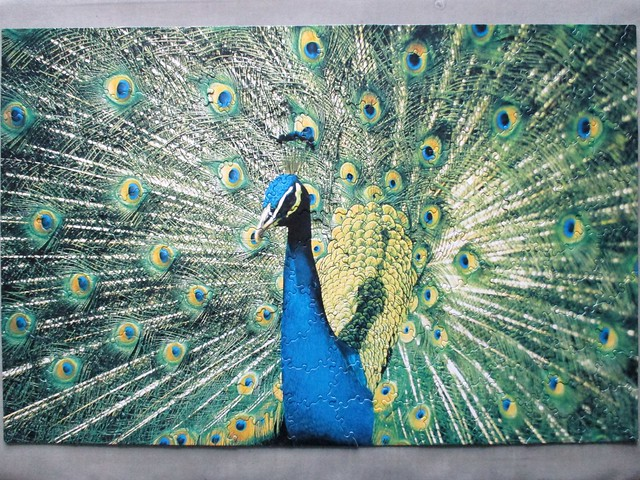 Peacock - Designs in Nature