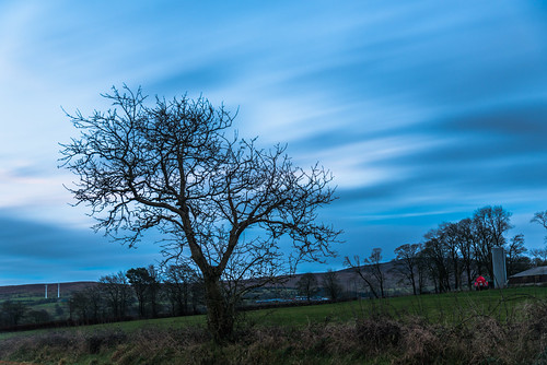 outdoor clouds cloudy countyantrim ireland landscapes northernireland sky tree trees twilight ulster winter 云 冬天 北爱尔兰 天 天空 日落 暮 暮色 树 爱尔兰