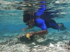 Survey team conducting the sea cucumber and habitat survey in May 2019 in Ha'apai, Tongatapu and Vava'u (Tonga)