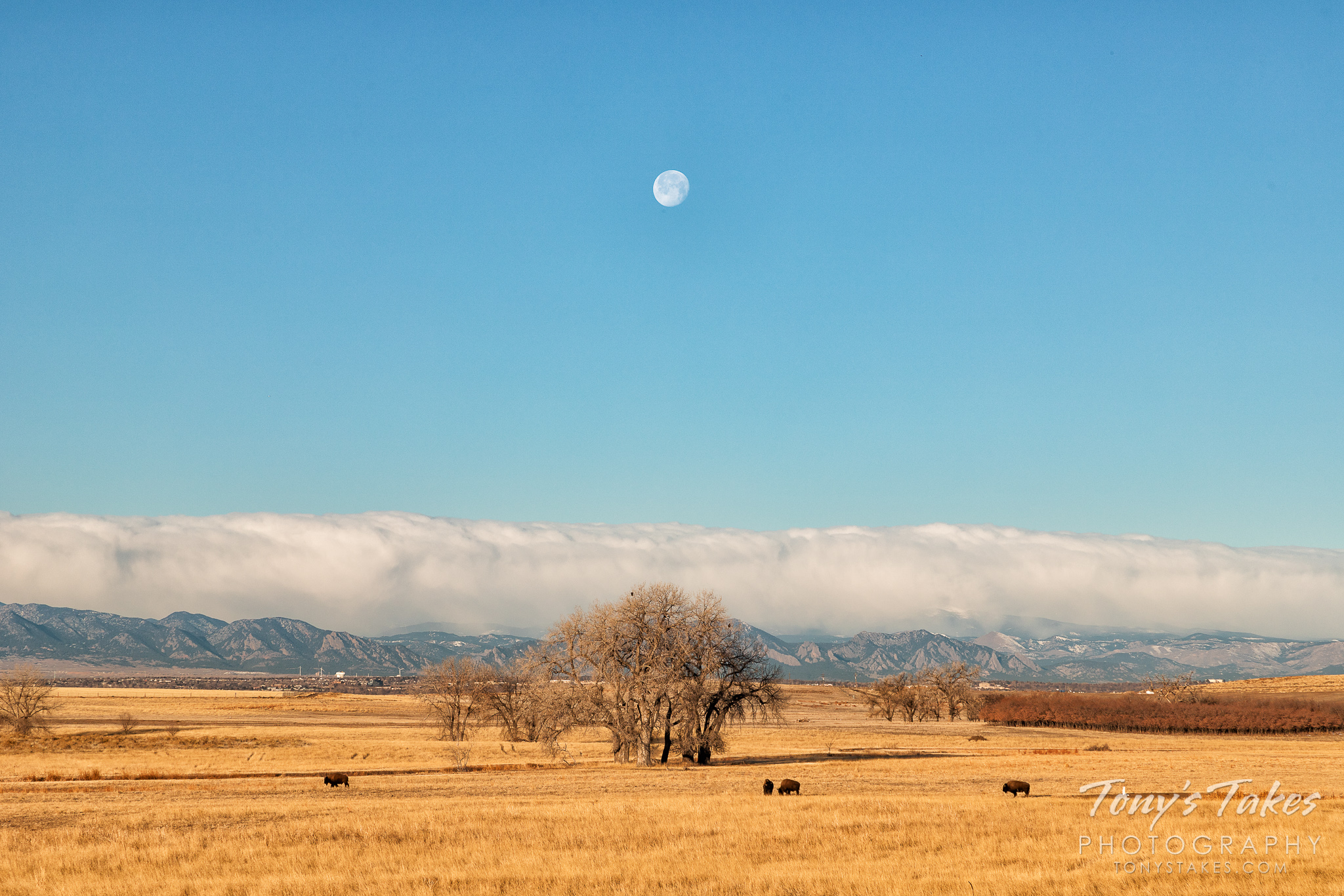 Setting moon over the plains