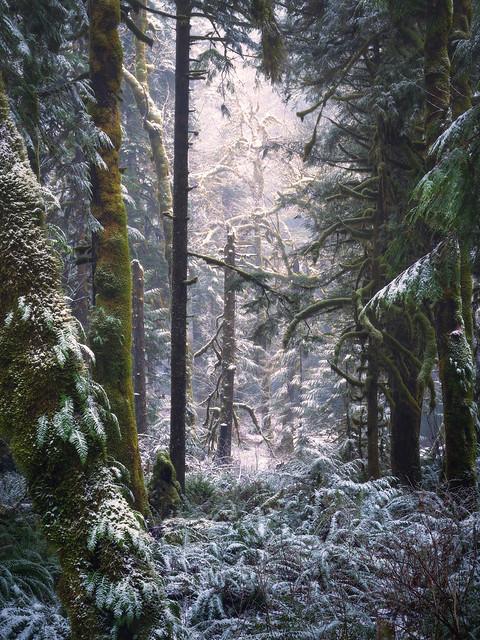 Salmon River Trail
