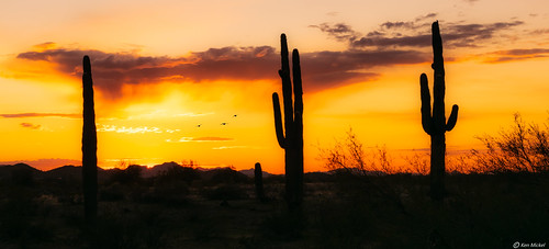 arizona cacti cactus desert estrellla goodyeararizona kenmickelphotography landscape outdoors plants saguaro sky sunsets backlighting nature photography silhouette silhouettes sunset goodyear unitedstatesofamerica