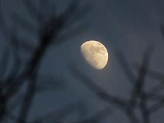 Lunar Branches