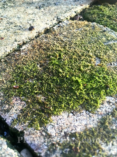 mosses and lichens 1