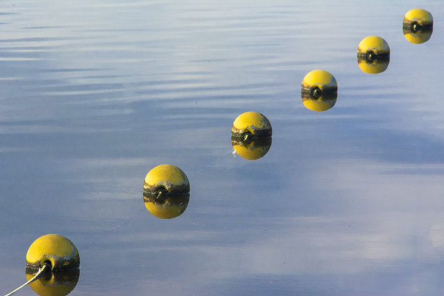 Floating line with yellow buoys
