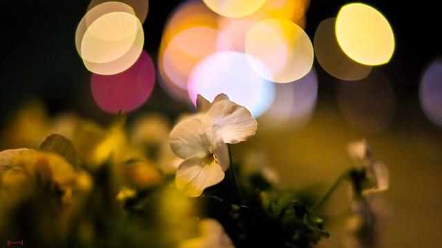 Flower - 7976