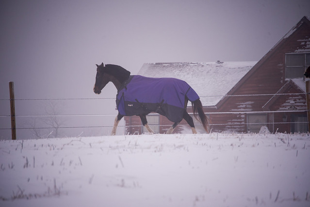 202001095 Horses and Dogs in Snow_138
