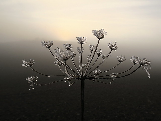A tiny work of art created by nature