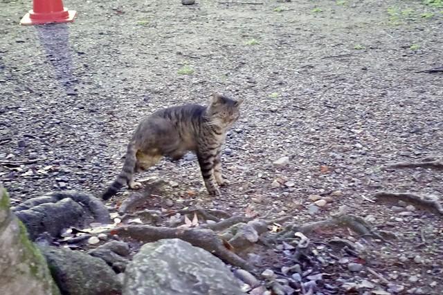 Today's Cat@2020-01-15