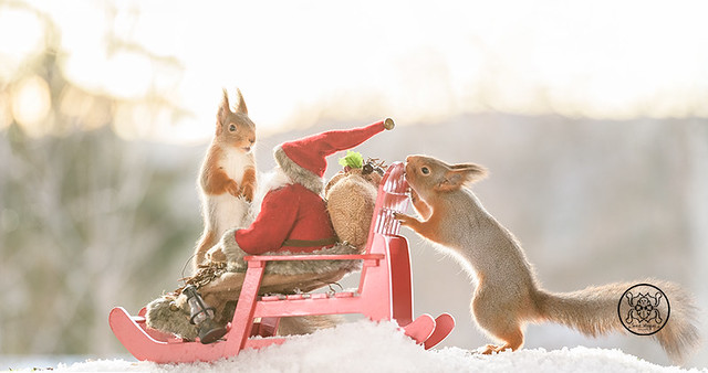 red squirrels sitting on an sleight with a Santa