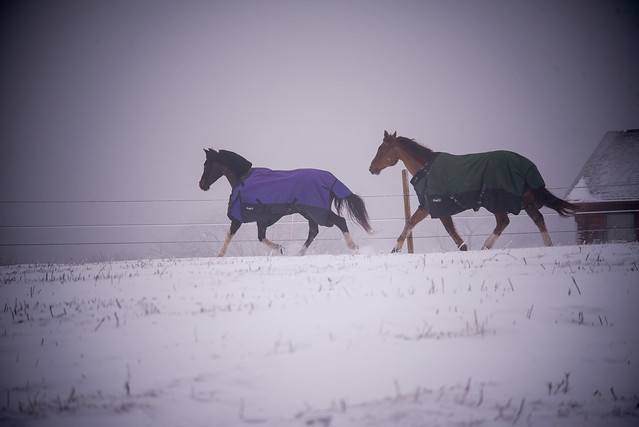 202001095 Horses and Dogs in Snow_141