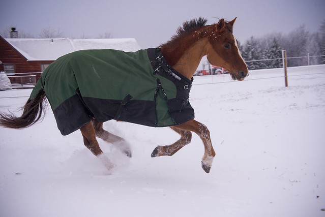 202001095 Horses and Dogs in Snow_222