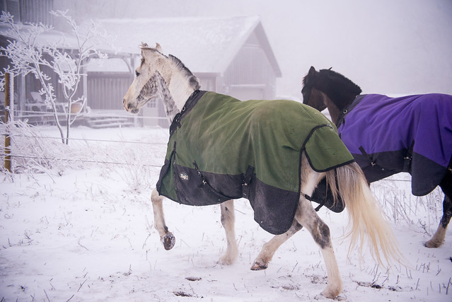202001095 Horses and Dogs in Snow_148