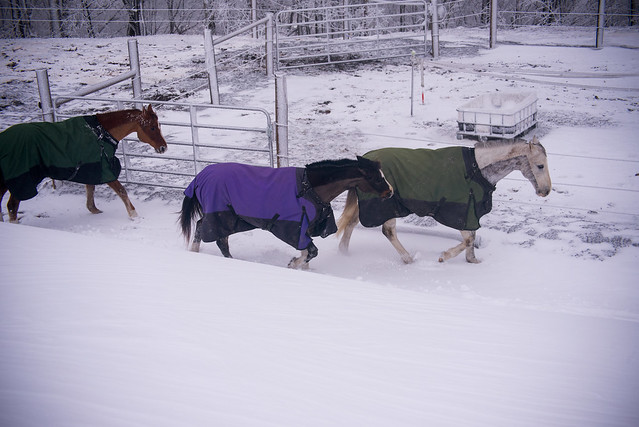 202001095 Horses and Dogs in Snow_161