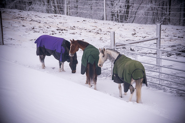 202001095 Horses and Dogs in Snow_159