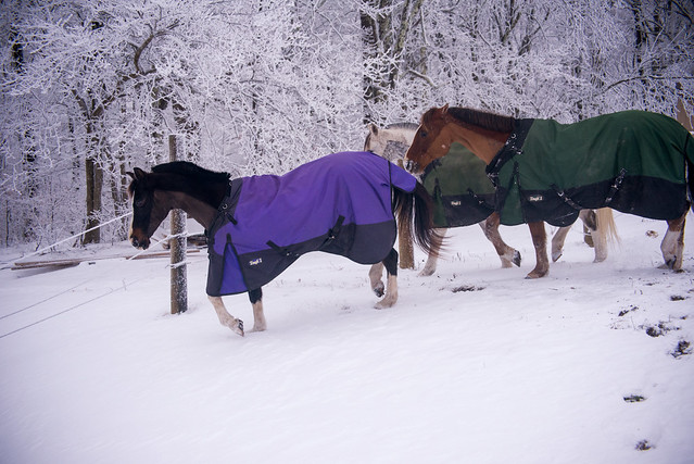 202001095 Horses and Dogs in Snow_155